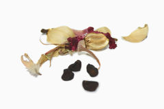 Morning glory's seeds. Royalty Free Stock Image