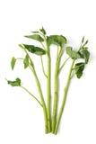 Morning glory vegetable Royalty Free Stock Photo