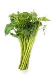 Morning glory vegetable Stock Image