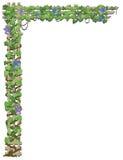 Morning Glory vine Stock Image