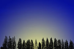 Morning glow. Line of fir trees in early morning Stock Image