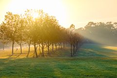 Morning glow of the sun shining through the mist. Morning sun shining through the trees of autumn and illuminating shafts of mist royalty free stock images
