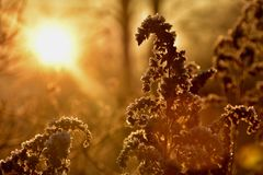 Morning gold. Beautiful gold morning Stock Images