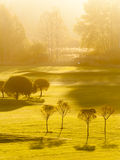 Morning on Golf Course Royalty Free Stock Images
