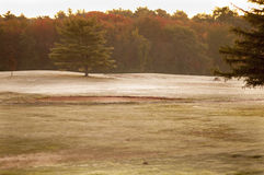 Morning on golf course Stock Image