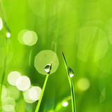 Morning grass Stock Photography