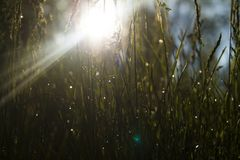 Morning grass royalty free stock photography