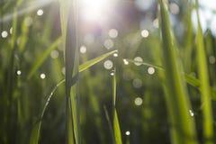 Morning grass stock photos