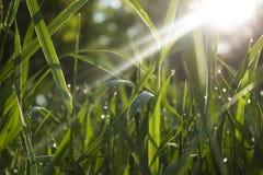 Morning grass royalty free stock photos