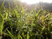 Morning grass. A clear view of grass lighten by sun at morning Stock Photos