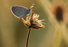 Morning grass flower with dew drops and small butterfly, Nature Stock Photo