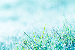 Morning, grass and hoar frost Stock Images