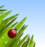 Morning grass and ladybug Royalty Free Stock Photography