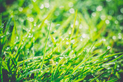 Morning Grass Macro Retro Stock Photography