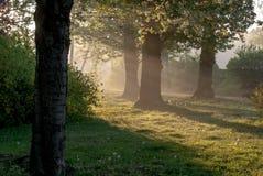 Morning. Grass, rope, flowering chestnut tree in early morning light, horizontal format Stock Photos