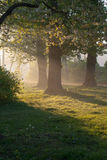 Morning. Grass, rope, flowering chestnut tree in early morning light, upright format Stock Photo