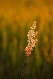 Morning Grass Stock Image