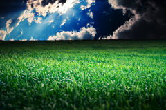 Morning green field Royalty Free Stock Photography