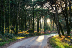 Morning in the green forest. Portugal, Sintra Royalty Free Stock Photography