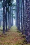 Morning Haze. Shot at Australian rural site royalty free stock image