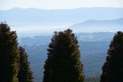 Free Morning Haze And Fog Covering A Valley With Mountain Sin The Background And A Group Of Pines In The Foreground. Stock Images - 131569304
