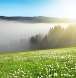 Morning haze in the National park Sumava Stock Image
