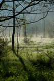 Morning Haze of Tashiro Wetland Royalty Free Stock Photo