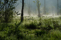 Morning Haze of Tashiro Wetland Stock Image