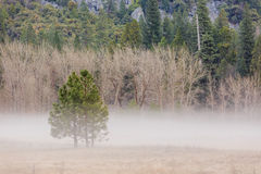 Morning haze at Yosemite National Park, California, USA Royalty Free Stock Image