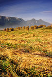 Morning in High Tatras (Vysoké Tatry). Summer morning in High Tatras (Vysoké Tatry Royalty Free Stock Photography