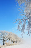 Morning hoarfrost Royalty Free Stock Images