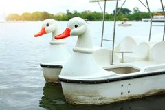 Morning on holiday with relaxing for family,white swan paddle bo. At for rent in lake,white duck paddle boat in pond at the park royalty free stock image
