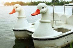 Morning on holiday with relaxing for family,white swan paddle bo. At for rent in lake,white duck paddle boat in pond at the park stock photos