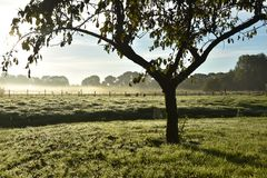 Morning in Holland. Beautiful morning in Holland Netherlands Stock Photo