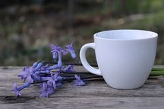 Morning hot coffe in mug and little blue flower hyacinths on wood table. Blurred background. royalty free stock photo