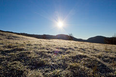 Morning ice on the grass Stock Image
