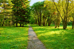 Free Morning In Forest Royalty Free Stock Photos - 7853608