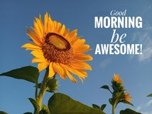 Morning inspirational motivational quote- Good morning, be awesome. With a beautiful smiling sunflower blossom and blue sky royalty free stock images
