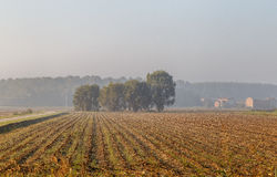 Morning in the Italian province of Emilia Romagna, a field. In the rays of dawn Royalty Free Stock Image