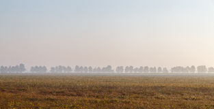 Morning in the Italian province of Emilia Romagna. A field in the rays of dawn Royalty Free Stock Photo