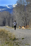 Morning Jog. Woman jogging in morning light with her dogs Stock Photography