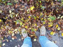 Morning jog along the autumn park and dew on sneakers Stock Photo