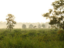 Morning in the jungle. Conservation area in West Bengal Stock Images
