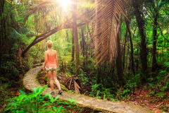 Morning jungle hike Royalty Free Stock Image