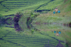Morning at the lake. Morning activity at the lake in the middle of tea plantation at west java indonesia Royalty Free Stock Photos
