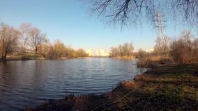 Morning on the lake in the city in the spring against the background of a high-rise building. relaxing by the calm water stock video