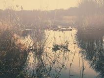 Morning lake Royalty Free Stock Photo