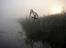 Morning lake in fog Stock Photography