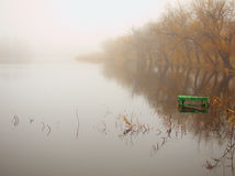 Morning lake in frog. Autumn morning lake in frog with green dais on the water Stock Image