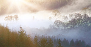 Morning landscape. Beautiful morning landscape with layers of mist over trees royalty free stock photo